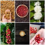 Celebrate Coffee in Green Bay and Northeast Wisconsin